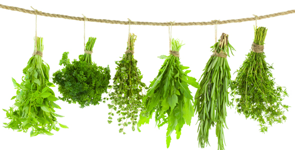 Siete hierbas que te ayudan a tener una piel bella y un cuerpo saludable