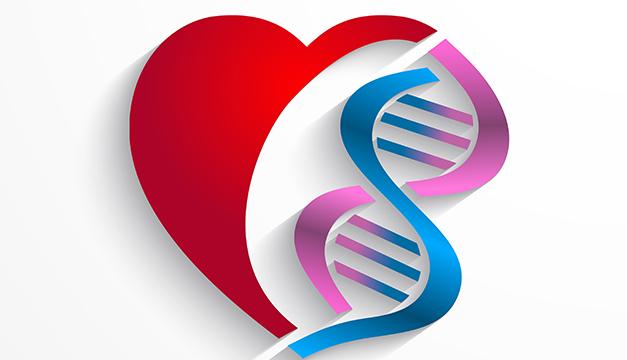 corazon genetica celulas madres cardiovascular