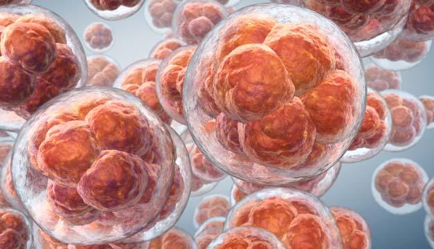 Metabolismo Celular un recurso para la prevención de..