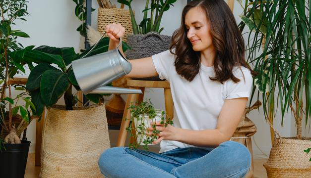 Top 6 de plantas que protegen tu casa de la contaminación