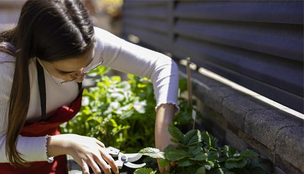 Las claves para hacer un huerto casero (con plantas medicinales)