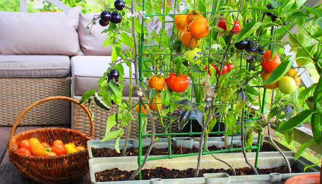 Las tres plantas infaltables en tu jardín y en tu cocina