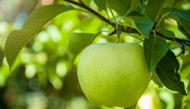 ¿Qué sucede si comes una manzana al día?