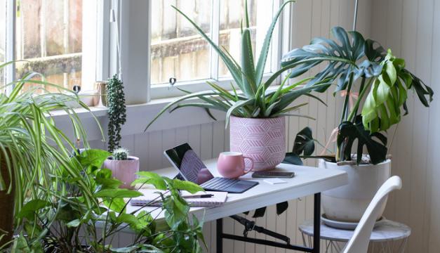 Tener plantas en la oficina es beneficioso para tu salud