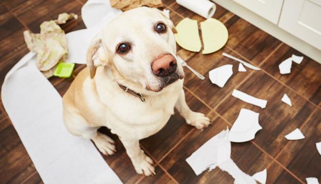 ¿Tu perro tiene ansiedad? Conoce los síntomas y cómo tratarla